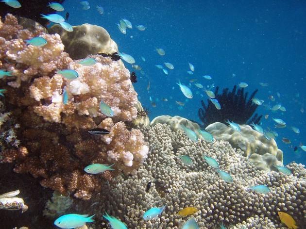Islas de Raja Ampat, en Indonesia / Hulivili